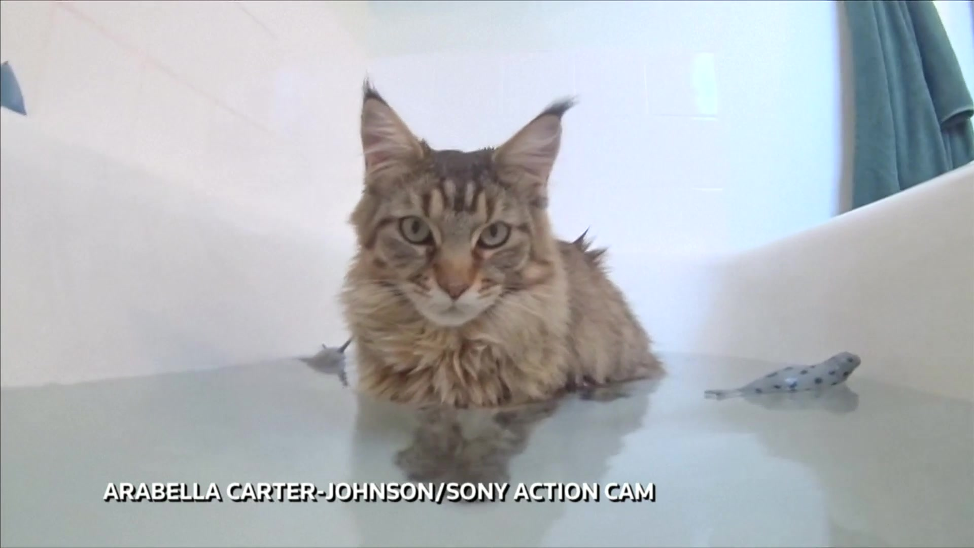 Autistic Girl, 6, Learns To Speak And Swim Thanks To Maine Coon Cat