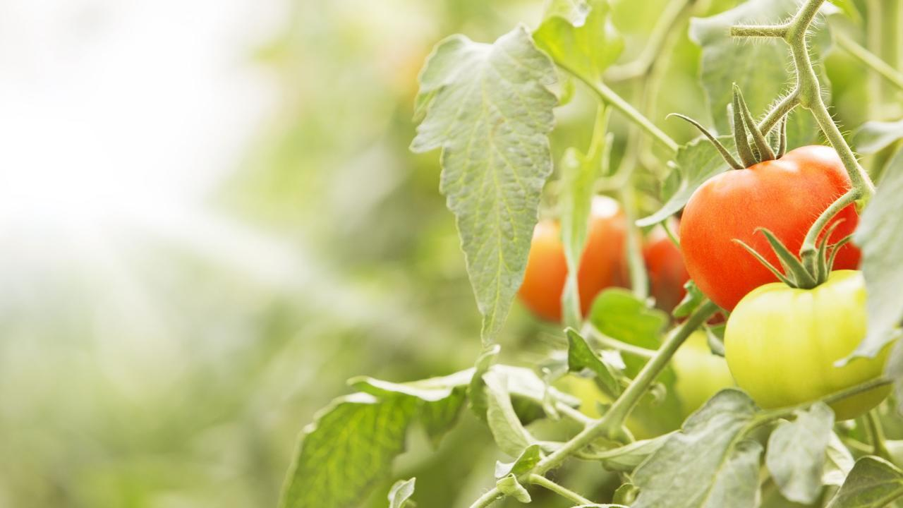The Best Tomato Recipes EVER | HuffPost Life
