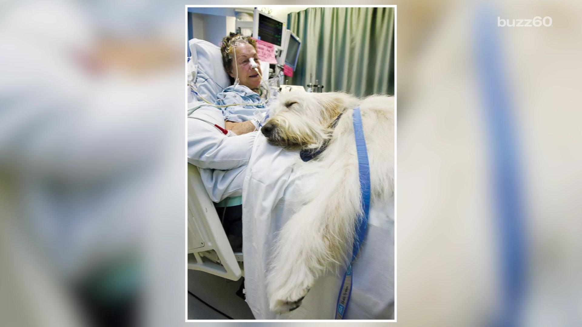 This Wonderful Hospital Allows Pets To Visit Their Poorly Owners