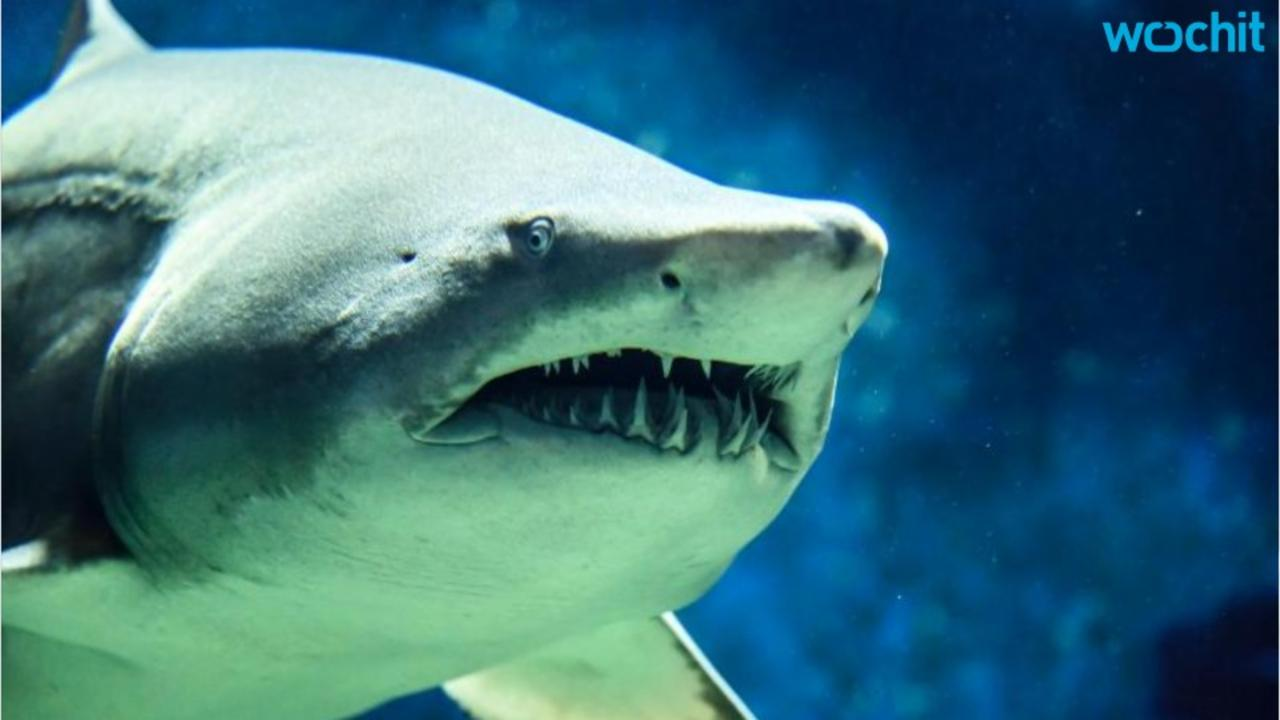 Sharks Could Be Resistant To Cancer And Scientists Think They Know Why