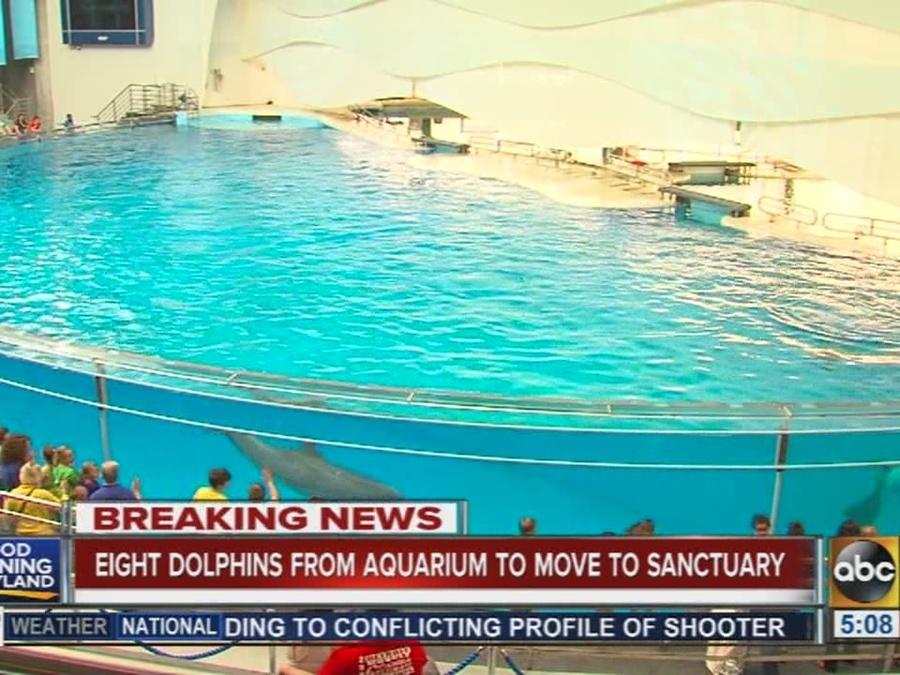 This Aquarium Is Moving All Its Dolphins To A Seaside Sanctuary