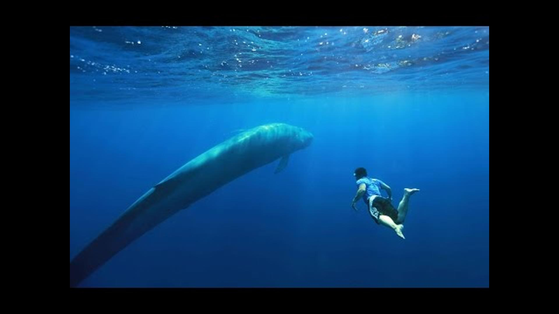 Stunning photo shows diver's close encounter with 100-foot blue whale