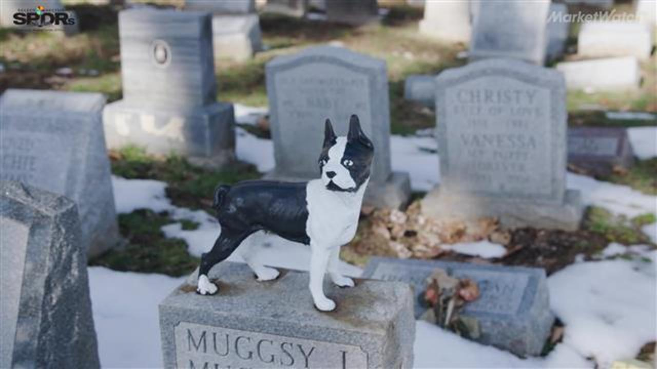 Healthy dog euthanized so late owner can be buried with pet