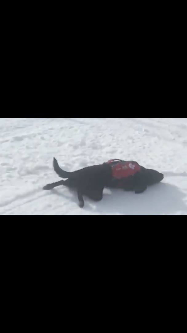 Rescue Dog's Downhill Slide Shows You How To Enjoy The Snow