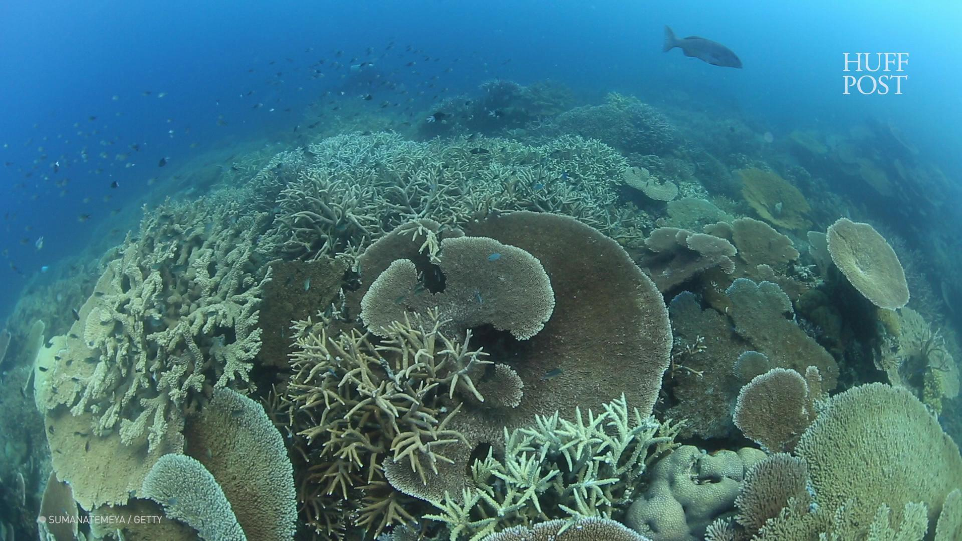 Time Is 'Running Out' As Great Barrier Reef Hit By Another Mass Bleaching
