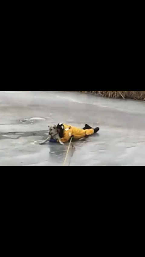 Hero Firefighter Slides Onto Thin Ice To Rescue Dog Who Fell Through