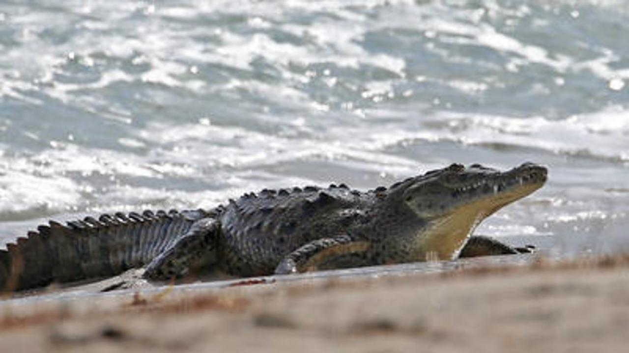 7-foot crocodile caught swimming in Ohio creek children were playing in