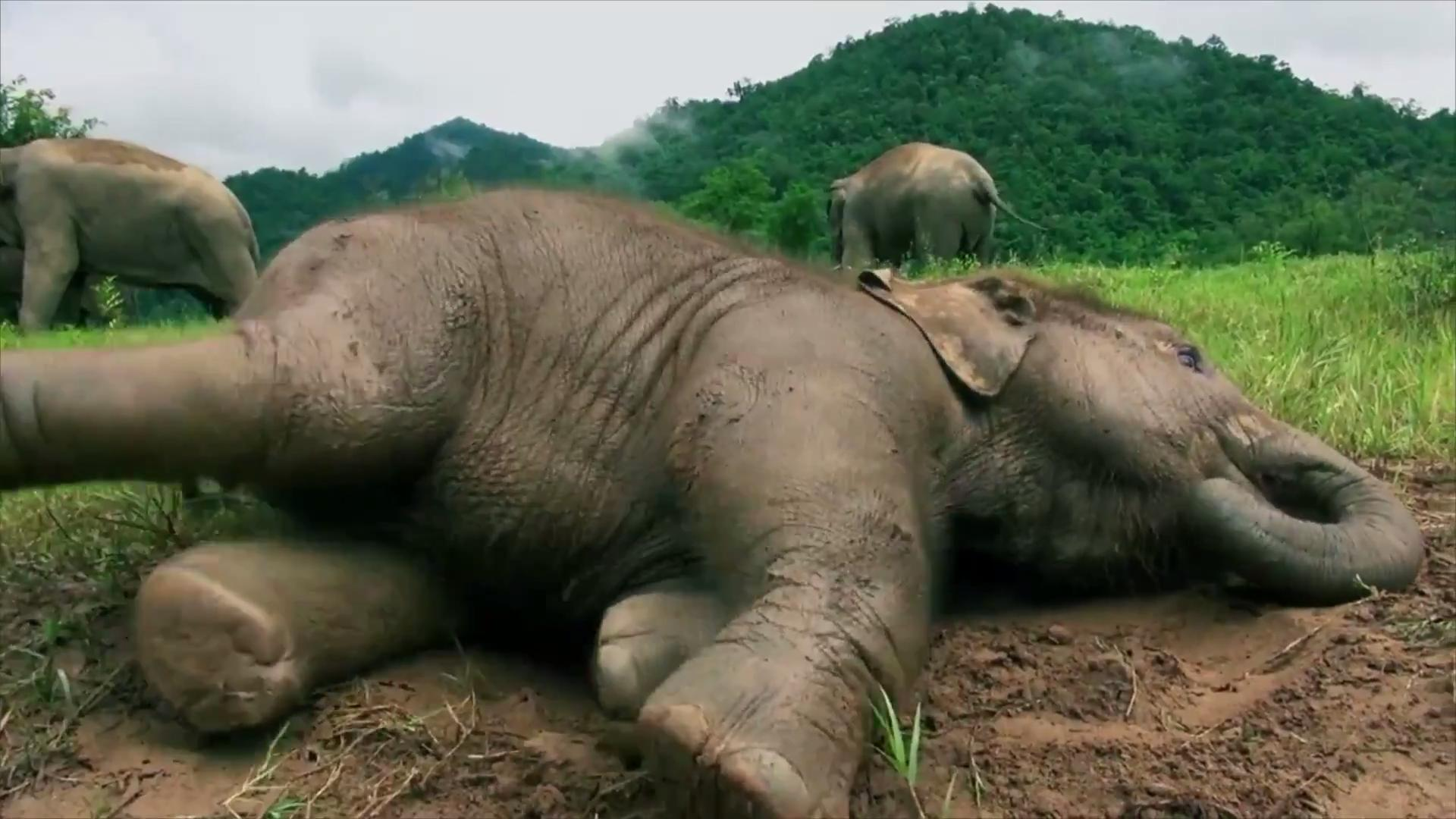 Crushing photos show emaciated elephant forced to perform during festival in Sri Lanka