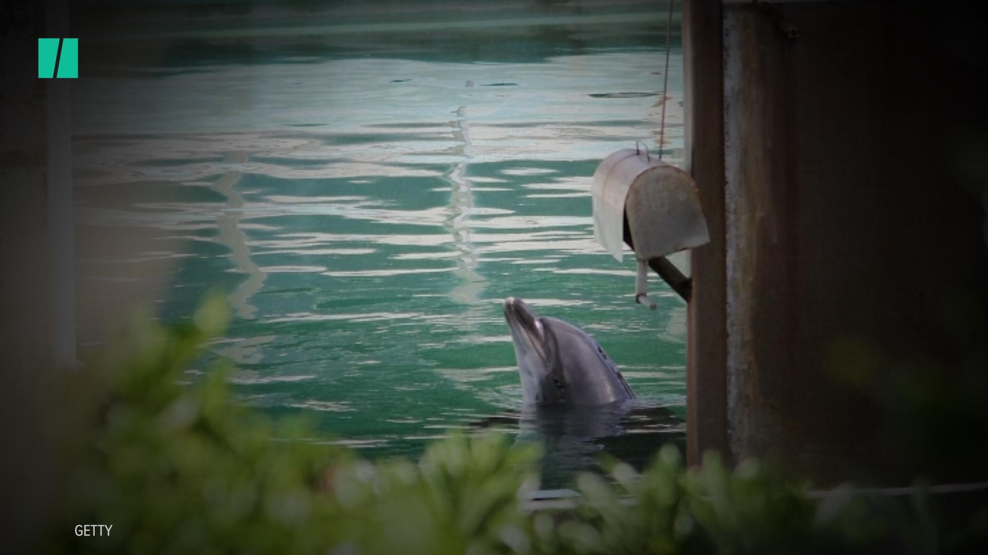 California Man Killed In Apparent Shark Attack Swimming Off Maui