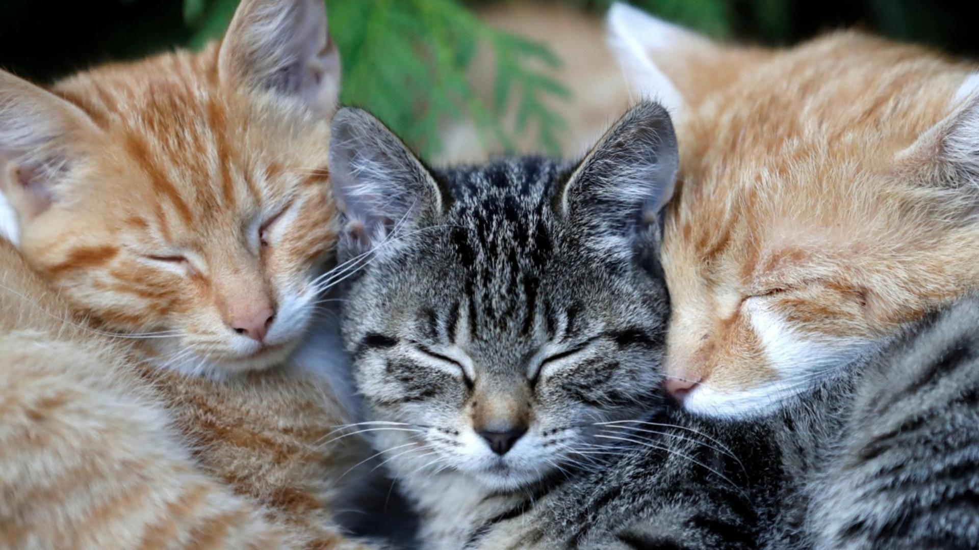 Don't Buy A Kitten Or Puppy – And 8 Other Ways To Help Animals This Winter