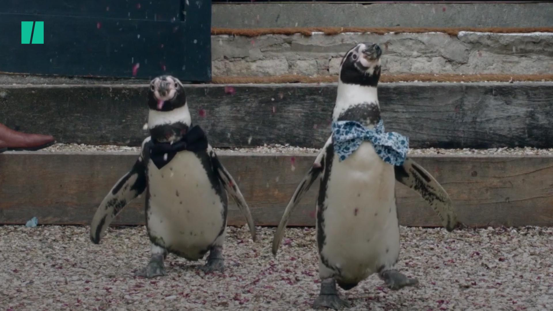 5 Cute Animals To End The Week: Penguins Wed And Cats Cuddle In Our Ode To Love