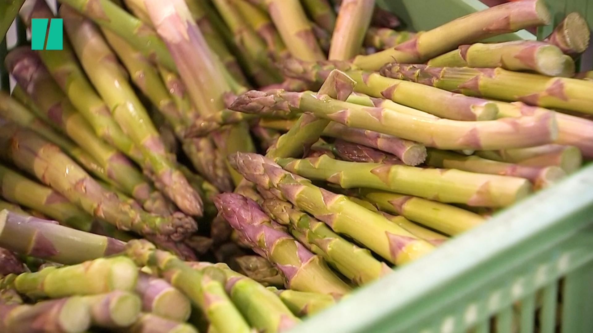Brexit Uncertainty Is Hitting British Asparagus Farmers