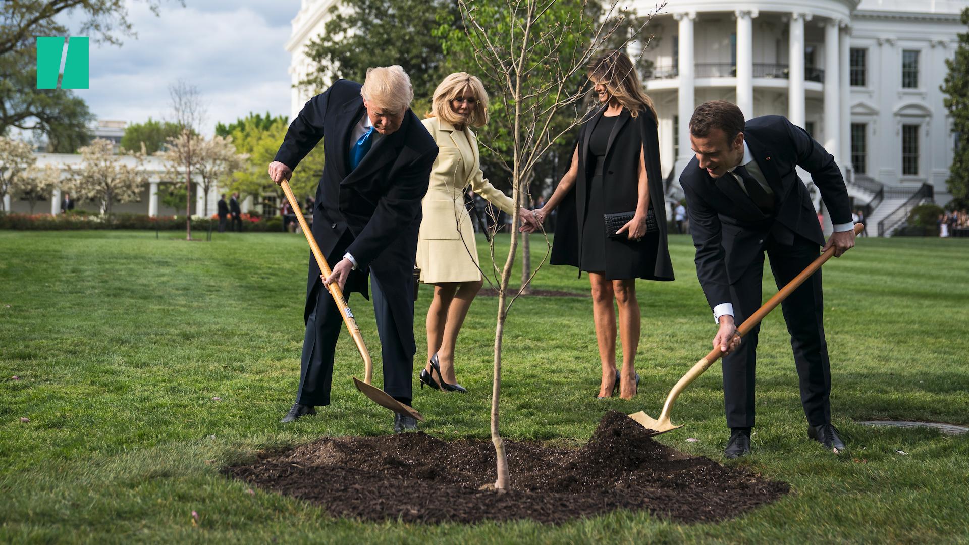 Trump And Macron Friendship Tree Dies