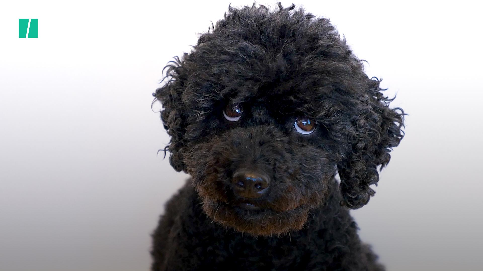 Puppy Dog Eyes Are A Real Thing, Say Scientists – As These 21 Adorable Pooches Show