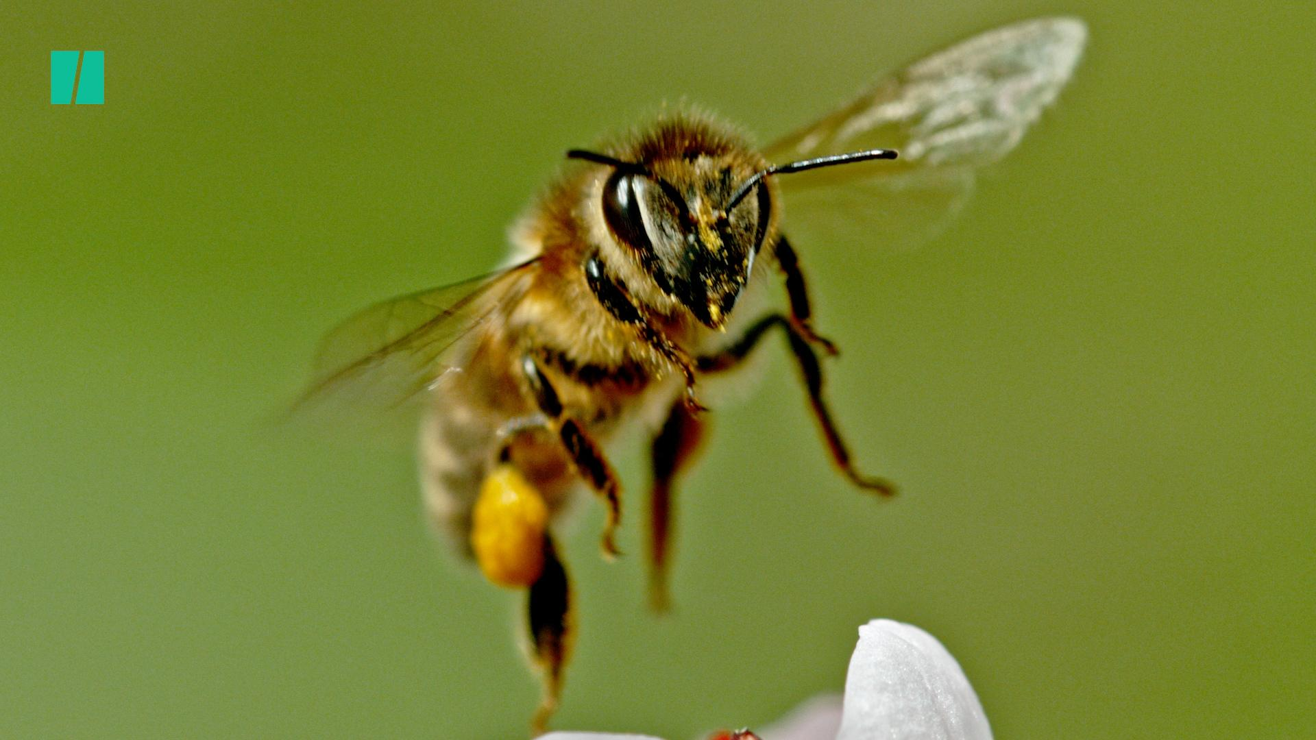 Are We Handling The Bee Crisis All Wrong?